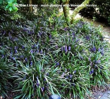 how to get rid of monkey grass naturally