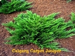 Calgary Carpet Juniper