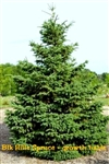 Evergreen Nursery Specializes In A Wide Variety Of Top